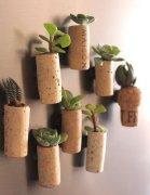 <b>软木塞植物盆景DIY—手工制作教程如下</b>
