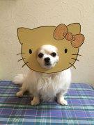 治愈系萌图:当狗狗遇上了逗逼主人
