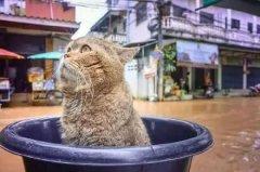 家里涨水,主人把猫咪放盆里救了出来,这货表情竟然...