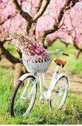 世界很大,梦想很远。很想,能载满一单车的花,去你在的地方,带着你,一起