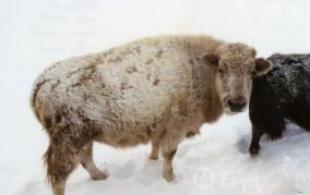 五大杂交动物,揭秘混合基因多神奇
