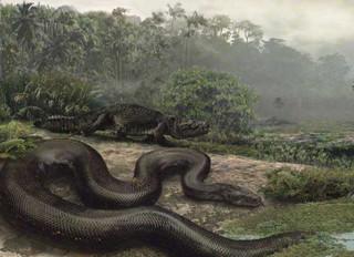 <b>世界上已知道最大最长的蛇是97米,是真的吗?</b>