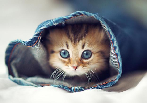 心都要融化了!每天都要抱在一起睡的可爱猫咪们