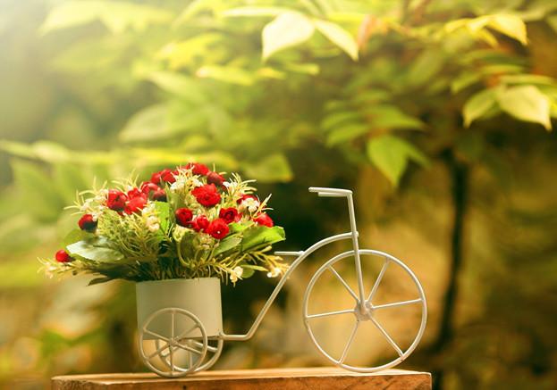 花友们钟爱的9种开花植物,阳台上易养易开花的盆栽