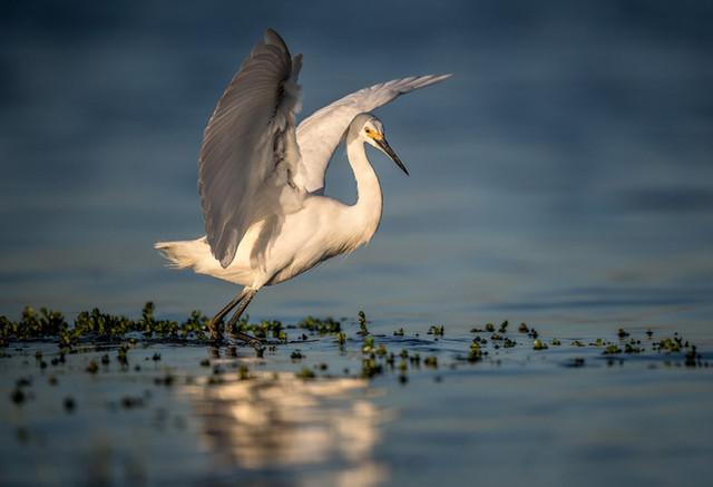 尼康D850野生动物主题摄影作品欣赏