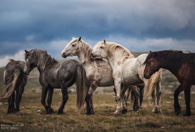 摄影师Carina Maiwald   以梦为马