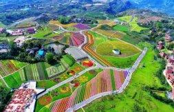 1500亩欧式花海搬来重庆,异国风情游让你换个口味!