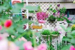 混凝土上种玫瑰 她用十年建成四季花园