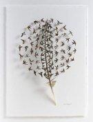 羽毛也能成艺术品 极细精致的雕刻作品
