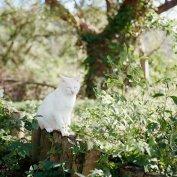 有时候觉得,像猫一样慵懒的活着就是幸福