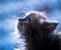 这只名叫黛西的小猫有着蓝色的眼睛,身形也很娇小