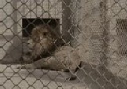 国内动物保护微电影《巴斯的草原》